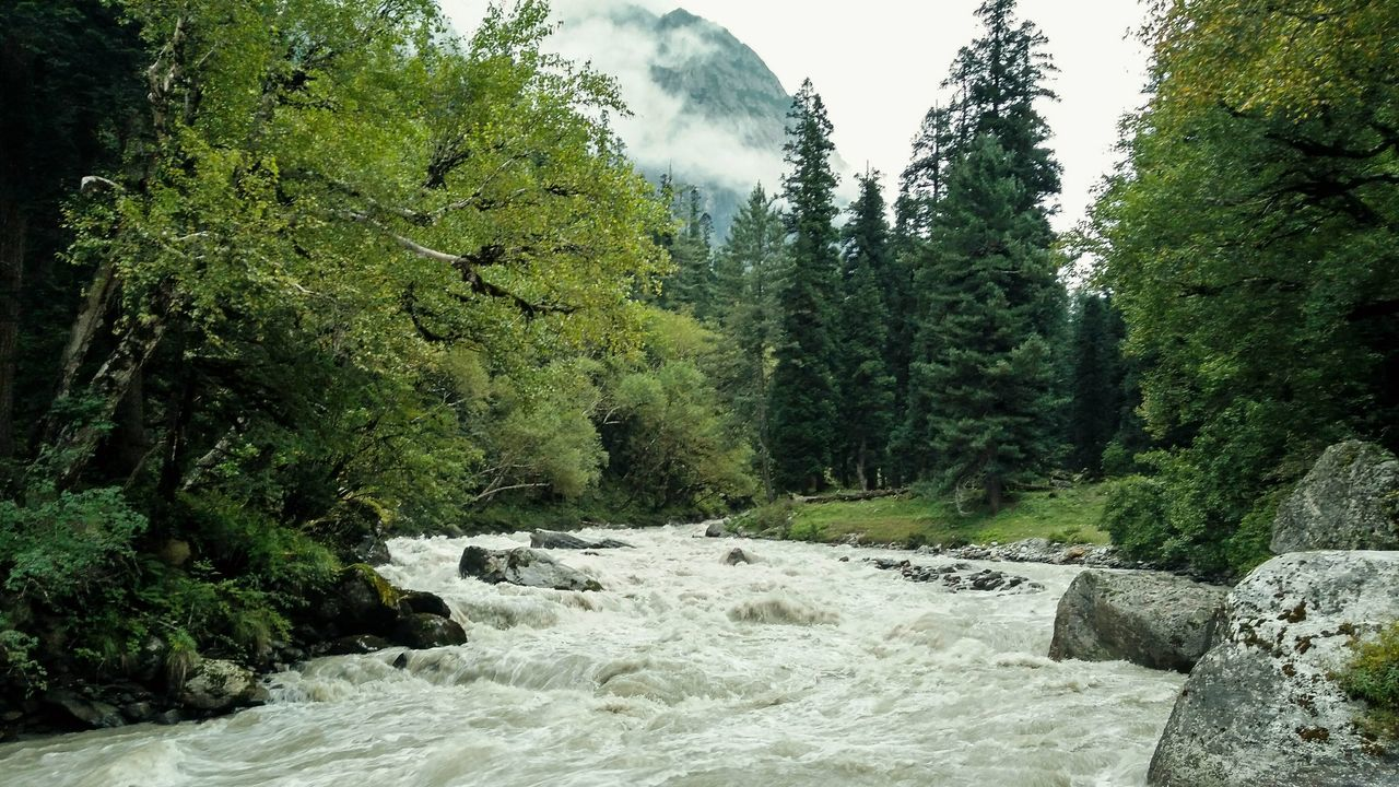 Tree Tranquility Nature River Outdoors Green Color Water Mountain Cloud Forest