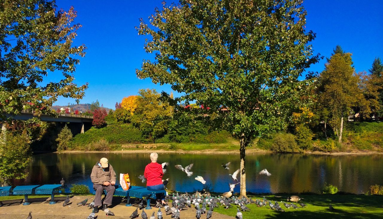 Grants Pass Elderly Couple Feeding Ducks Senior Citizen  Proctecting Where We Play Quality Time EyeEm Best Edits IPhoneography Rogue River