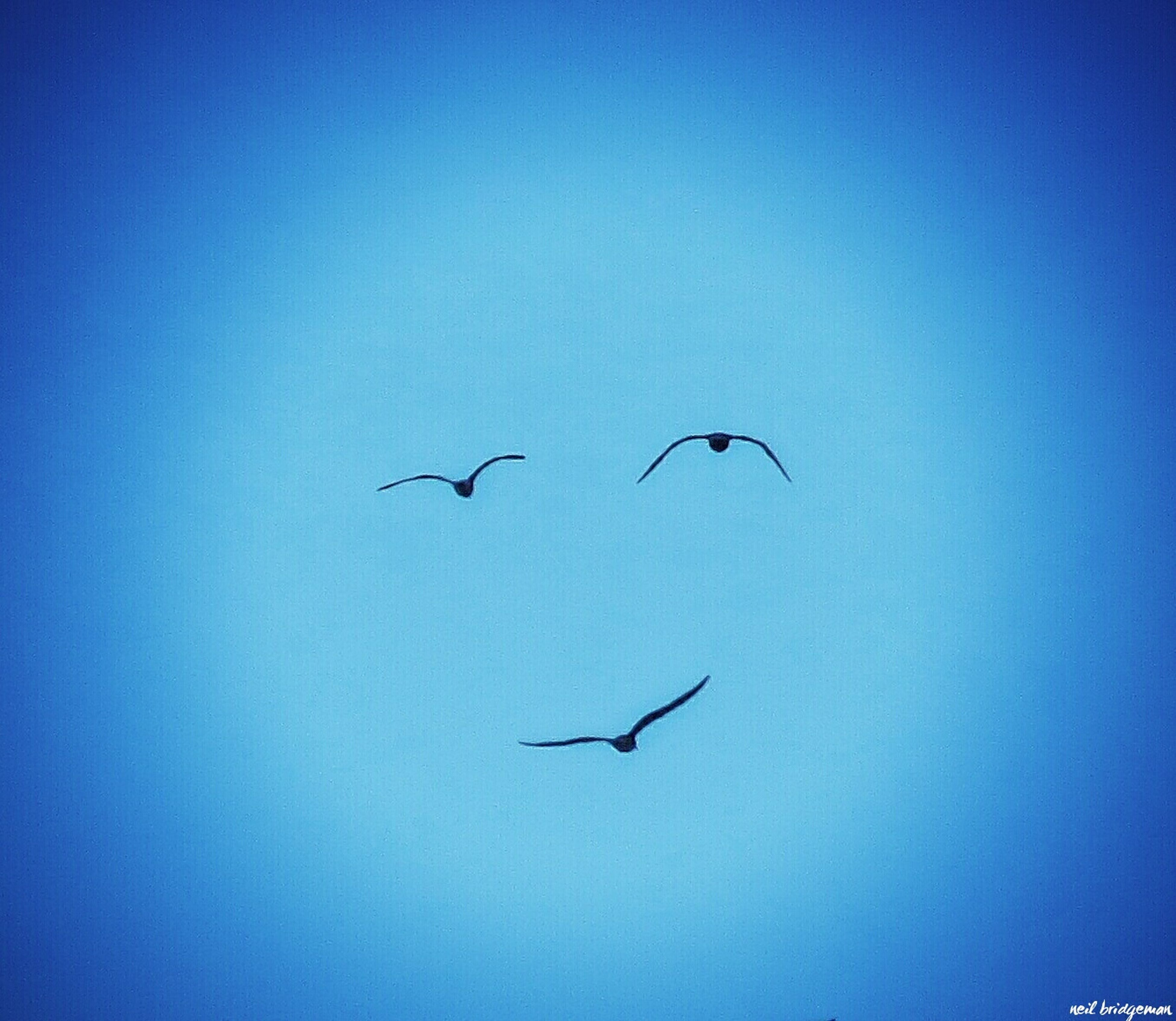 flying, bird, animals in the wild, animal themes, low angle view, blue, clear sky, copy space, mid-air, day, nature, no people, spread wings, animal wildlife, outdoors, beauty in nature, sky