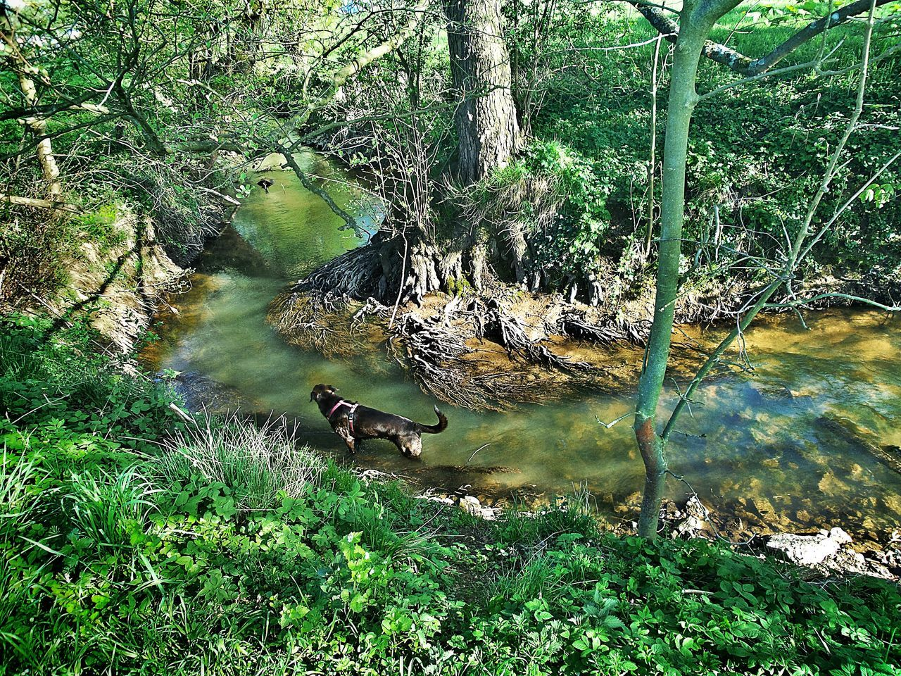 Down By The Creek Green Hell in Germany🇩🇪 Langenselbold Light And Shadow Green Color Water Tree Roots  Roots Reflections Dog Dog Taking A Bath First Summer Day Animal Themes Animals In The Wild Nature Tree Outdoors Landscapes Creekside Photography Day Long Goodbye The Secret Spaces The Great Outdoors - 2017 EyeEm Awards BYOPaper!
