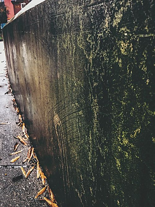 Outdoors Close-up Nature Fall Beauty Fall Collection Peaceful Artistic Nature Photography Urban