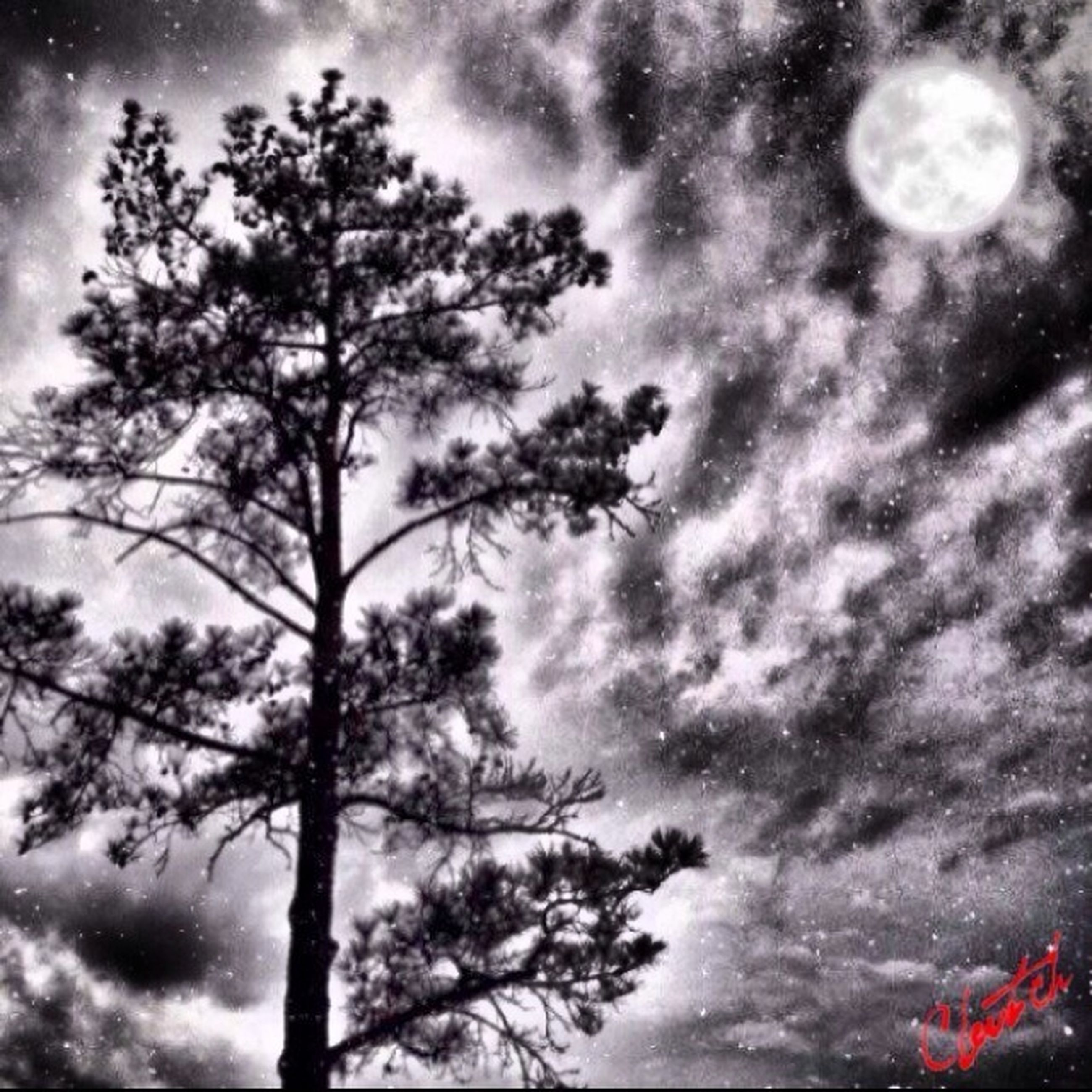 sky, low angle view, tree, cloud - sky, cloudy, tranquility, silhouette, weather, beauty in nature, scenics, cloud, nature, tranquil scene, bare tree, overcast, branch, dramatic sky, dusk, storm cloud, idyllic