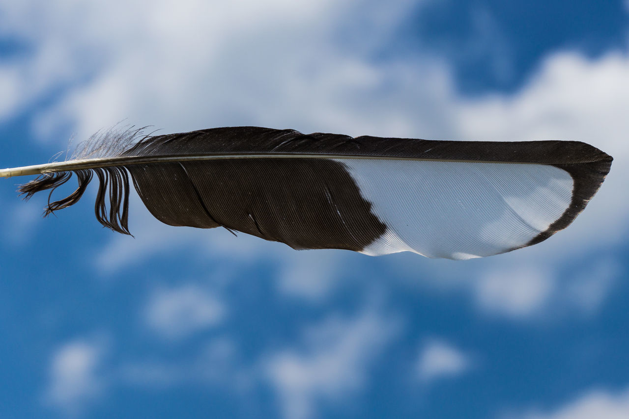 Beauty In Nature Close-up Cloud - Sky Feather  Feder Flying Flügel Mid-air No People Outdoors Schwarzweiß Spread Wings Magpie Elster