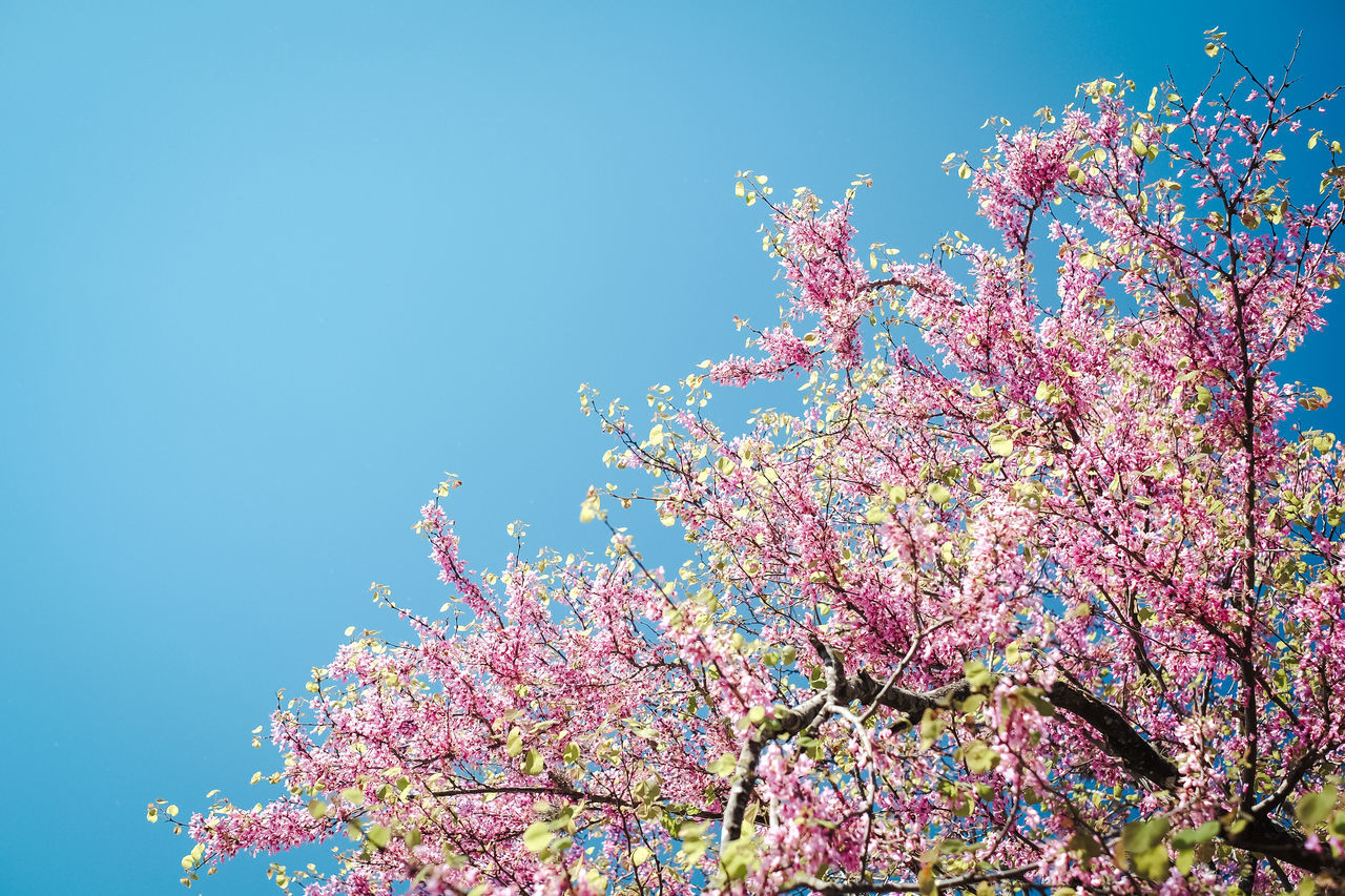Hello spring! Apple Blossom Beauty In Nature Blossom Botany Branch Cherry Blossom Clear Sky Close-up Day Flower Flower Head Fragility Freshness Growth Low Angle View Nature No People Orchard Outdoors Pink Color Sky Spring Springtime Tree