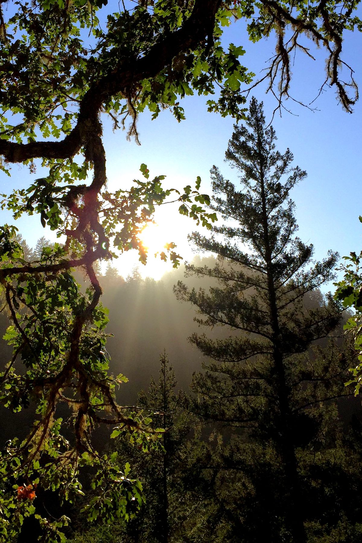Sun setting over the forest ridge Sunset Cazadero Landscape Light And Shadow Nature