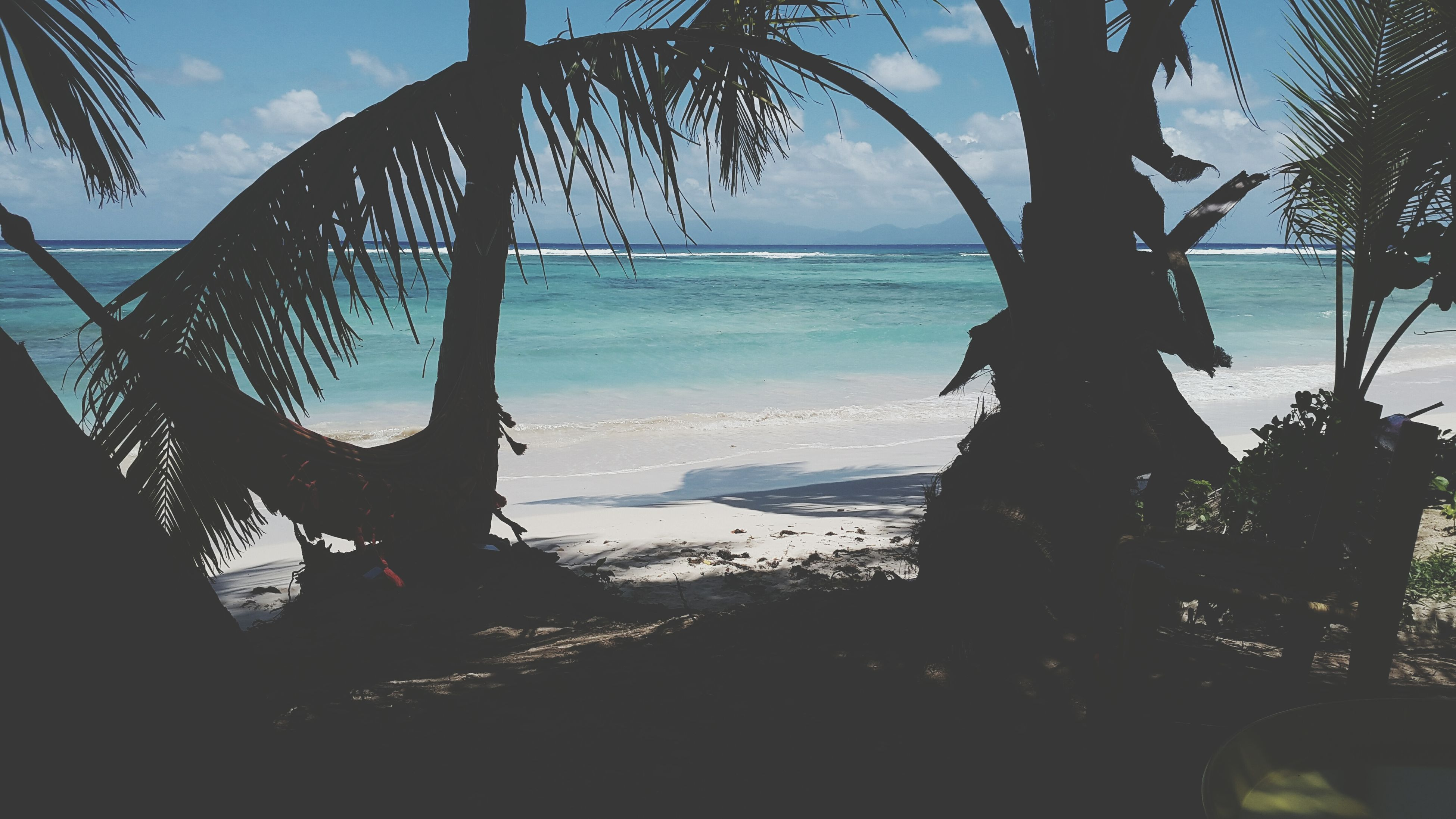 sea, beach, scenics, beauty in nature, nature, horizon over water, tree, water, tranquility, tranquil scene, sky, day, palm tree, tree trunk, outdoors, branch, no people