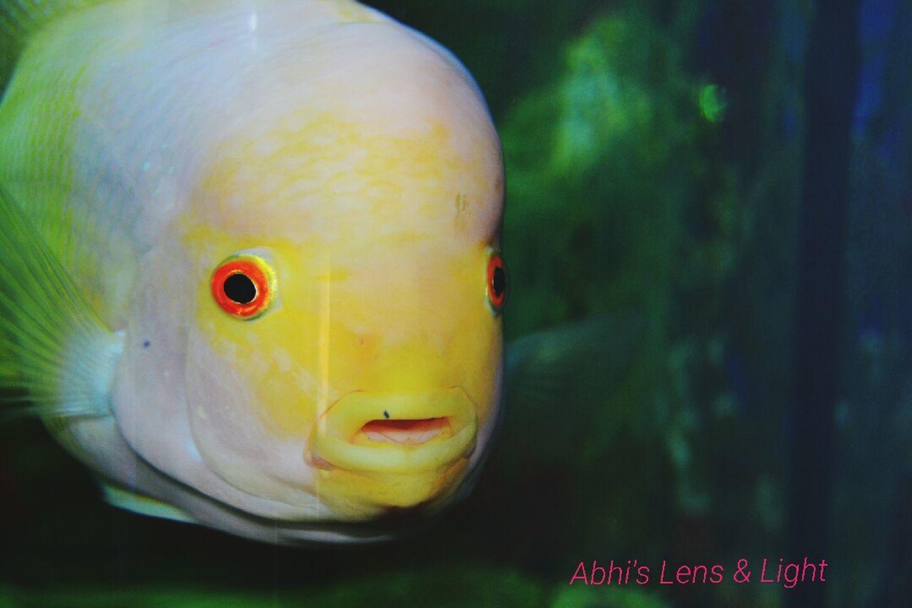 Aquarium Life Aquarium Aquarium Photography Aquariumfish Water Kissing Fish Kerala Kerala India India Picoftheday Neyyardam Neyyar Dam