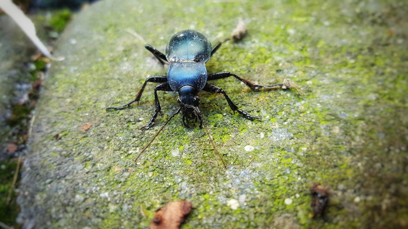 He looks like he want to fight with me... I just wanted to take a photo of this lovely strongman (woman? Sorry if I am wrong) Animal Themes Animals In The Wild Black Color Close-up Day Green Color Insect Nature No People One Animal Outdoors Poland