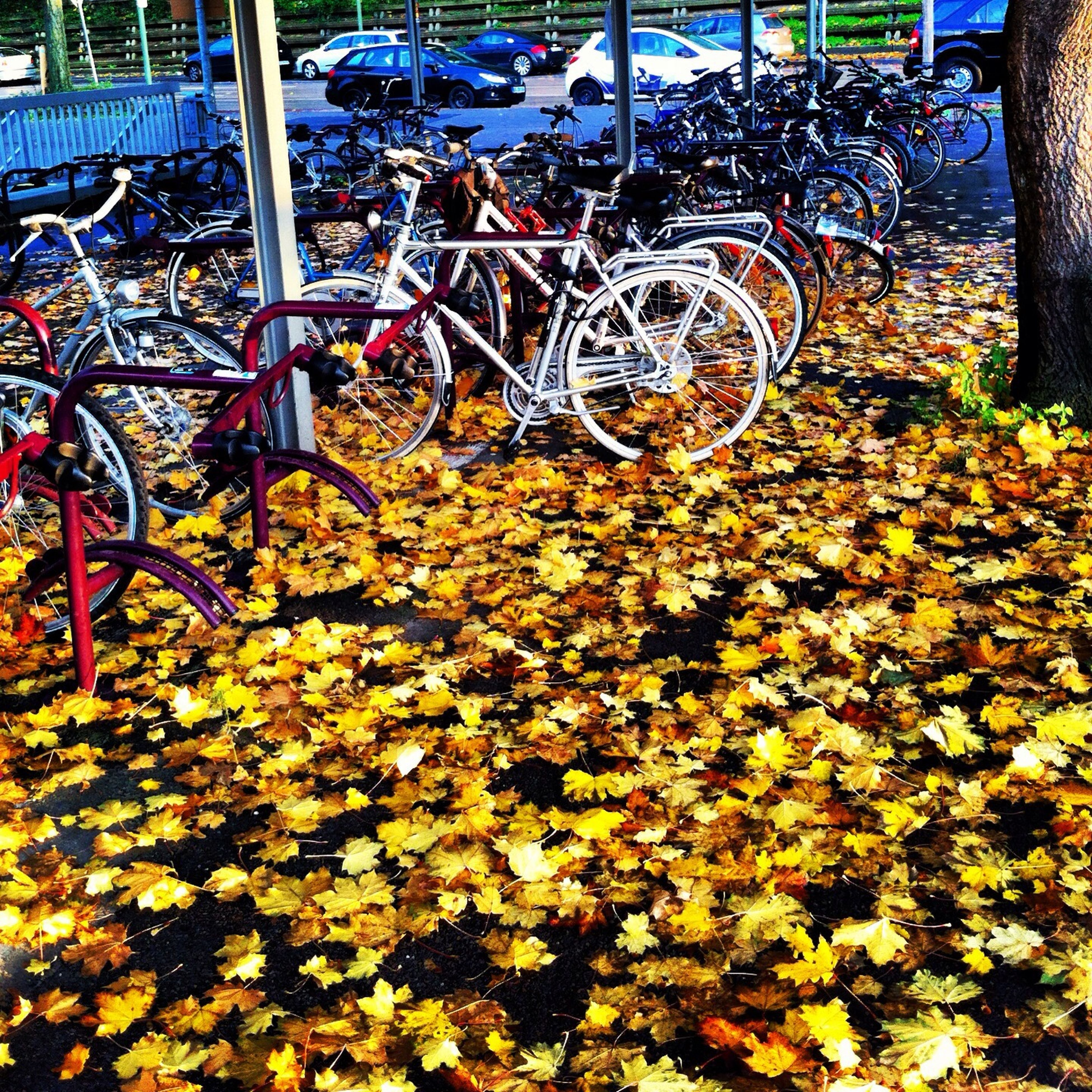 flower, plant, growth, leaf, park - man made space, nature, bicycle, day, outdoors, autumn, fragility, front or back yard, freshness, potted plant, fence, yellow, abundance, change, season, beauty in nature