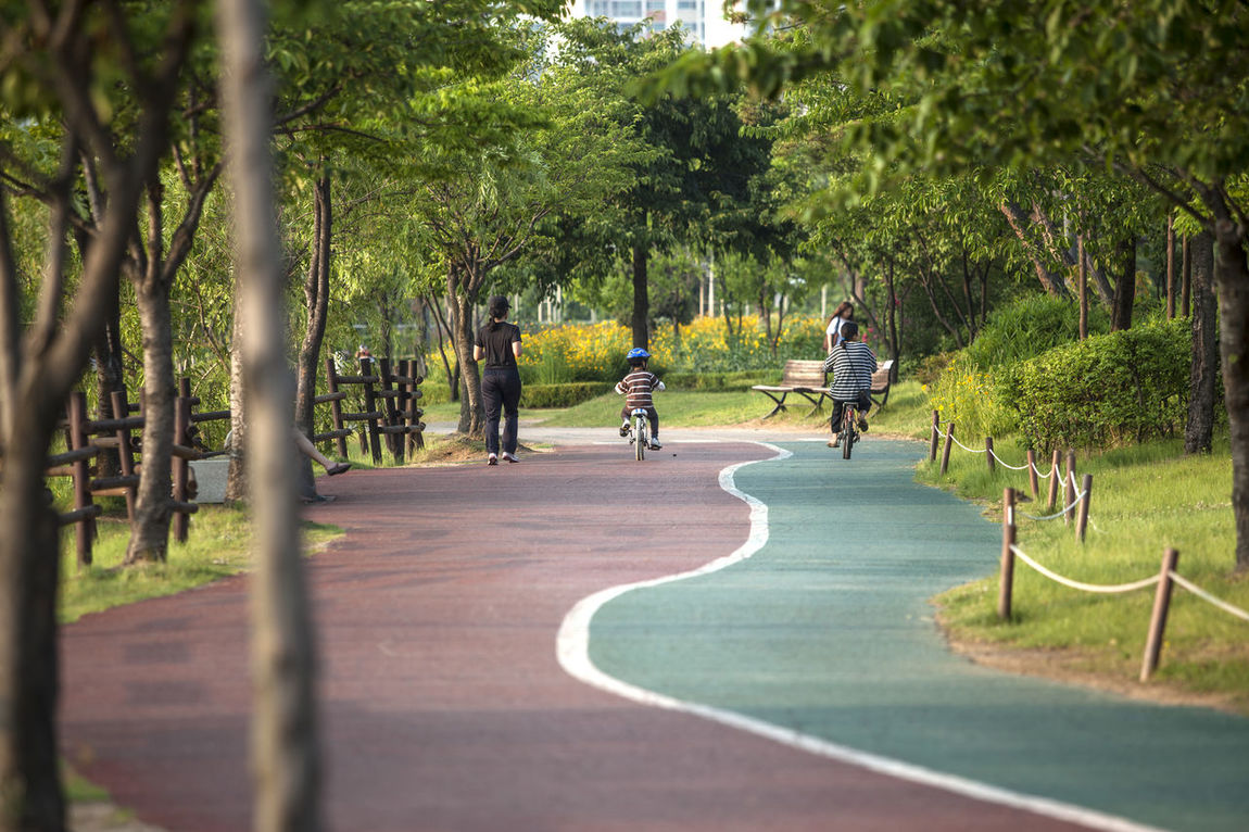 Bicycle Bucheon Lake Park Day Diminishing Perspective Footpath Grass Green Color Growth Leisure Activity Lifestyles Nature Outdoors Park Parking Physical Training Road Running Sunlight The Way Forward Tranquility Tree Tree Trunk Treelined Vanishing Point Walkway