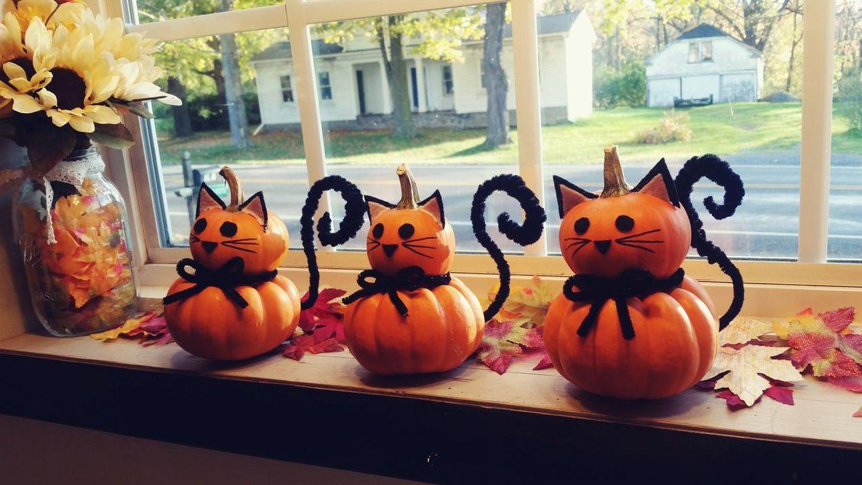 EyeEm Selects Halloween Halloween Decorations Decorations DIYWindow Holiday - Event Halloween Indoors  Tradition Celebration Pumpkins Pumpkin Cats Cute Fall Autumn Autumn Leaves Party Decorations