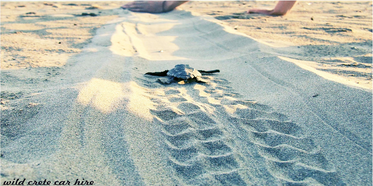Protection for the turret carreta carreta ! Animal Themes Animal Wildlife Animals In The Wild Beach Cars Day High Angle View Mammal Nature No People One Animal Outdoors Reptile Sand Sea Turtle Shadow Sunlight Tortoise Tortoise Shell First Eyeem Photo