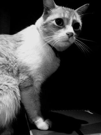 Gato Cat Panic Cute Photography