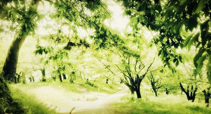 近くの公園 IPhone Green EyeEm Nature Lover