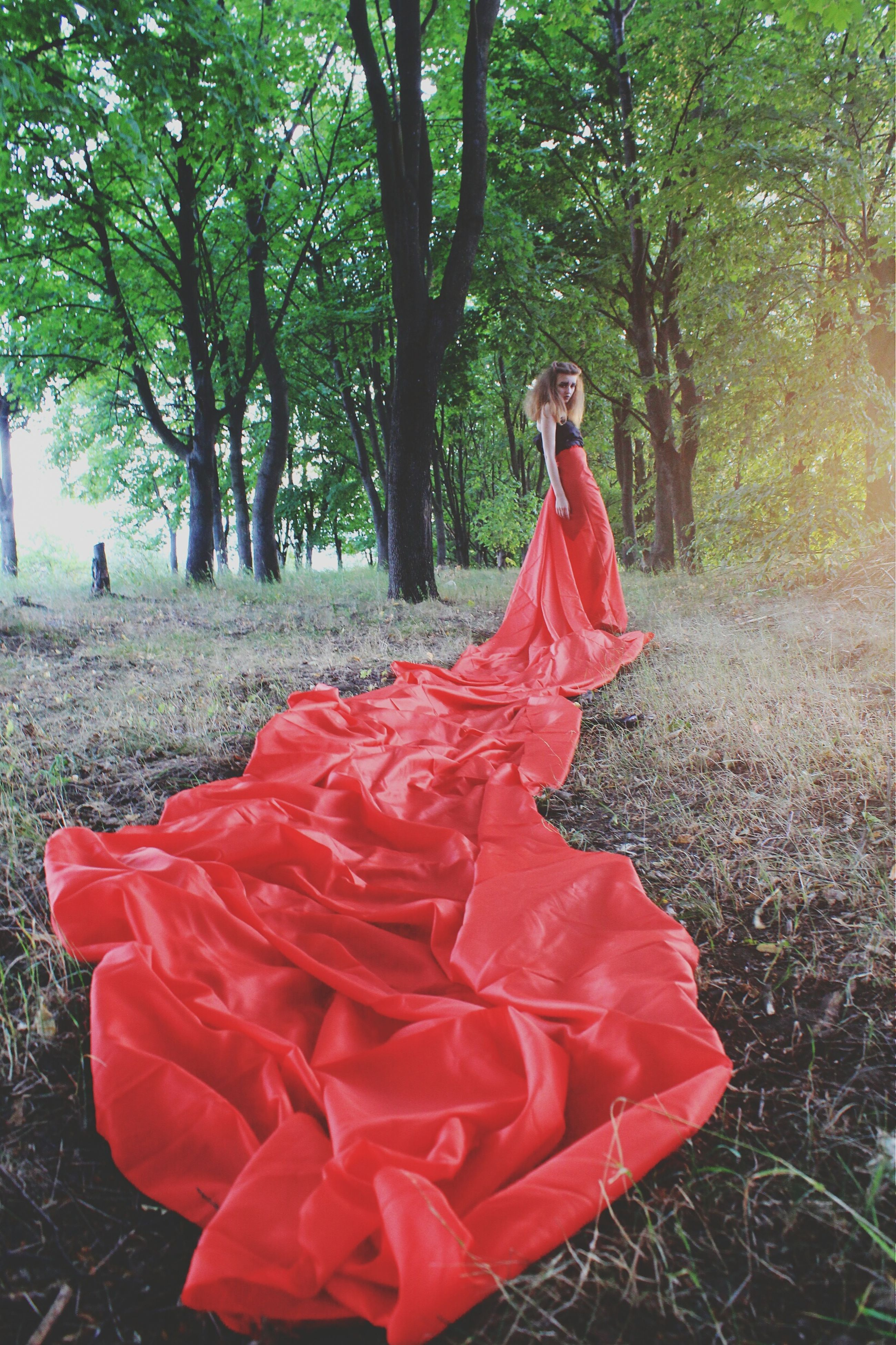 red, tree, park - man made space, focus on foreground, day, nature, lifestyles, forest, flower, growth, outdoors, leisure activity, full length, casual clothing, park, front view, rear view, sitting