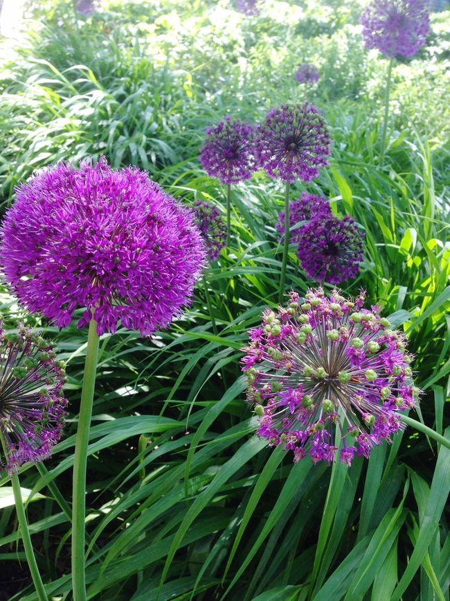 Beautiful Nature Garden Photography EyeEm Flower Flower Collection