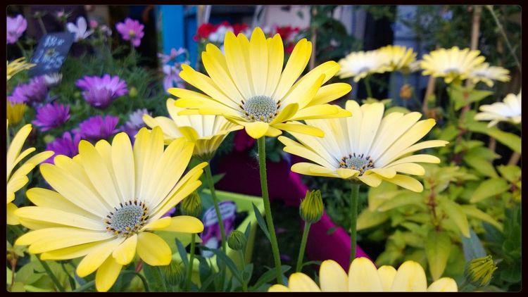 Flowers Nokia Lumia 920