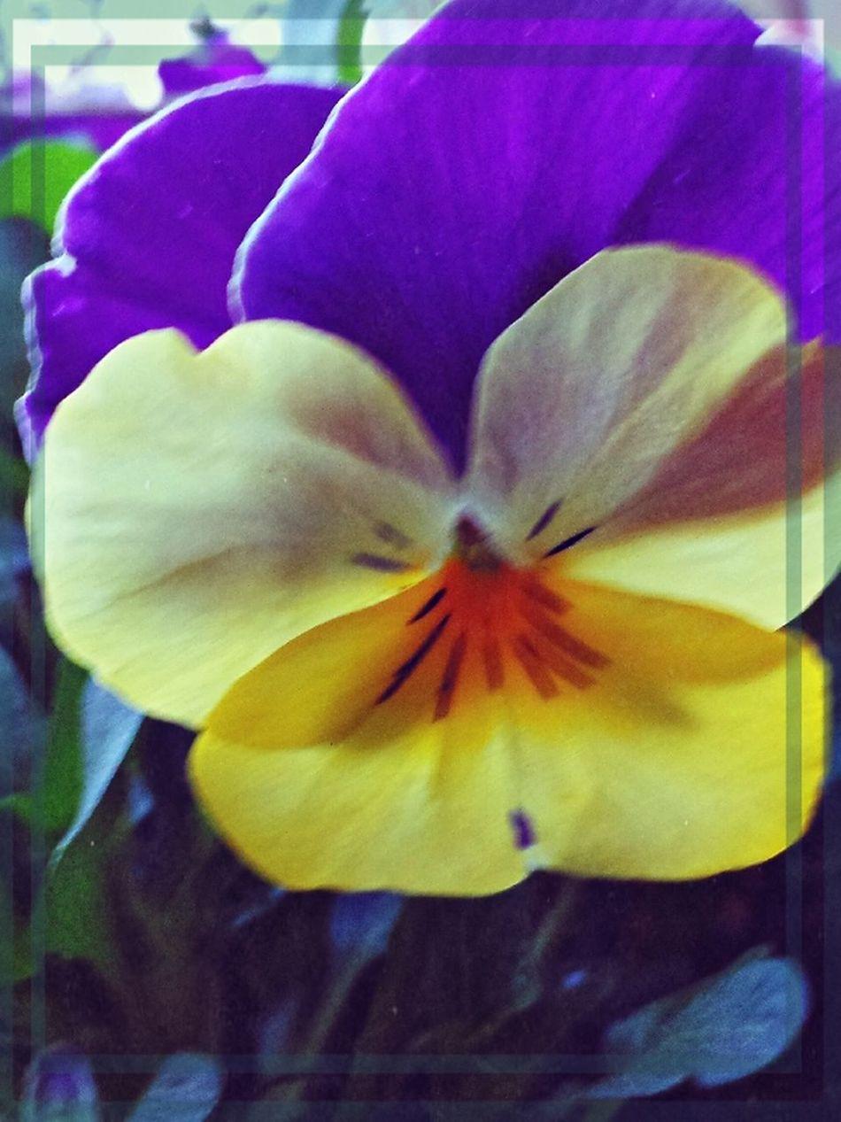 a flowerforyou EeYem Best Shots Instagram #followme #follow #eyeem #awesome #streamzoo #instahub #photo #sigueme #followhim #cute #follow4follow F4f Followback [ Heartflowers Flower floweholic streamzooville flowerstream streamzoo BloomingGreat popular