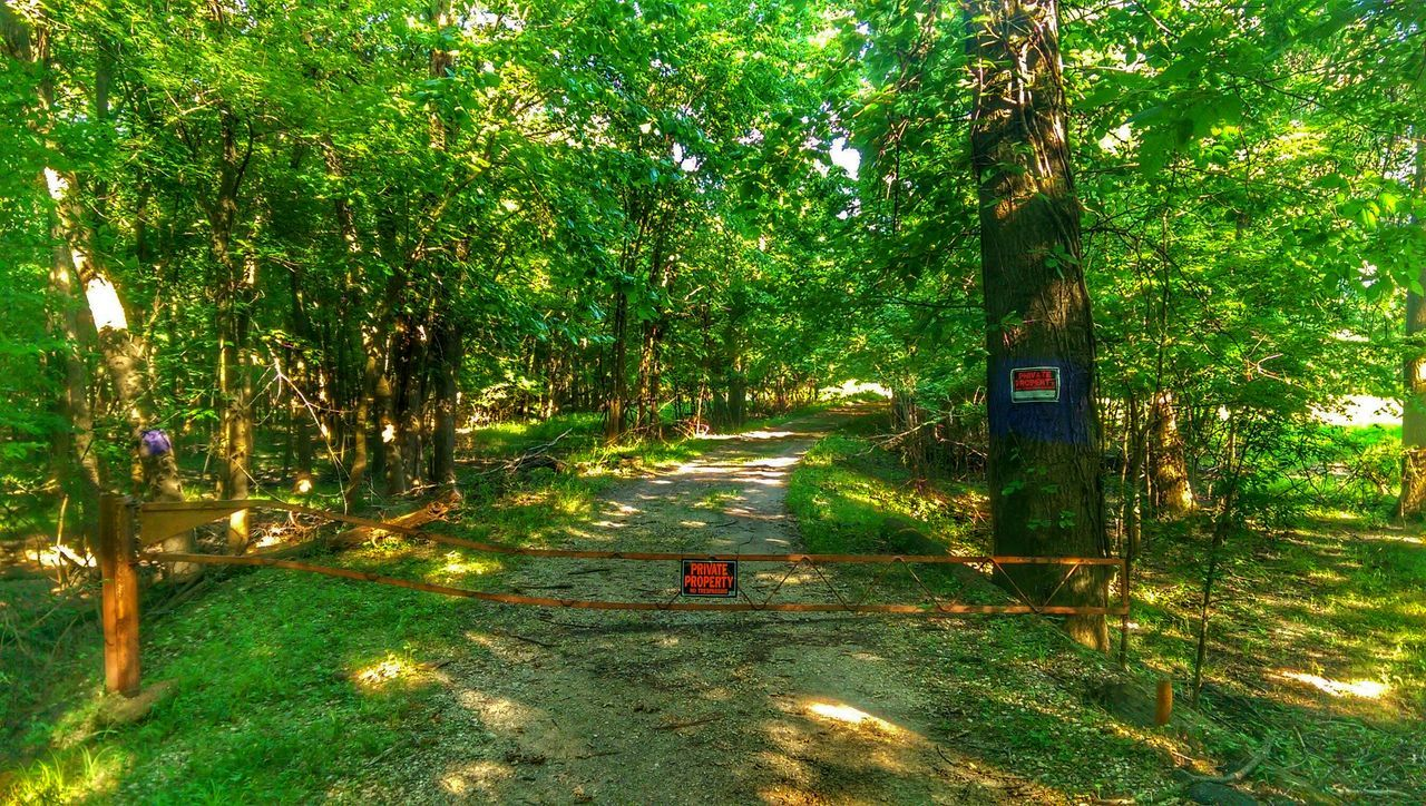 Eye Am Nature Treetasticthursday Sunlight And Shadow Road To Somewhere Tresspassing For Art Signstalkers The Great Outdoors Colour Of Life