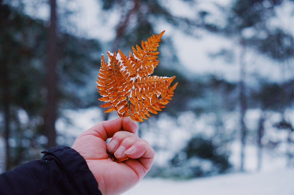 a hand holding a Frozen fern leaf Fern Frozen Leaf Frozen Nature Hand Unrecognizable Person Winter Cold Frost Human Hand Human Body Part Autumn Holding Nature Winter One Person Focus On Foreground Outdoors Leaf Close-up Tree Change Beauty In Nature Cold Temperature
