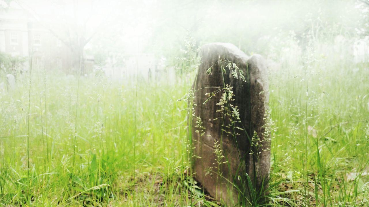 -Cemetery in Fog- Flatbush Reform Church Cemetery Flatbush Church Street Brooklyn Cemetery Fog For Over Cemetery Graveyard Gravestone Street Photography The Street Photographer - 2016 EyeEm Awards
