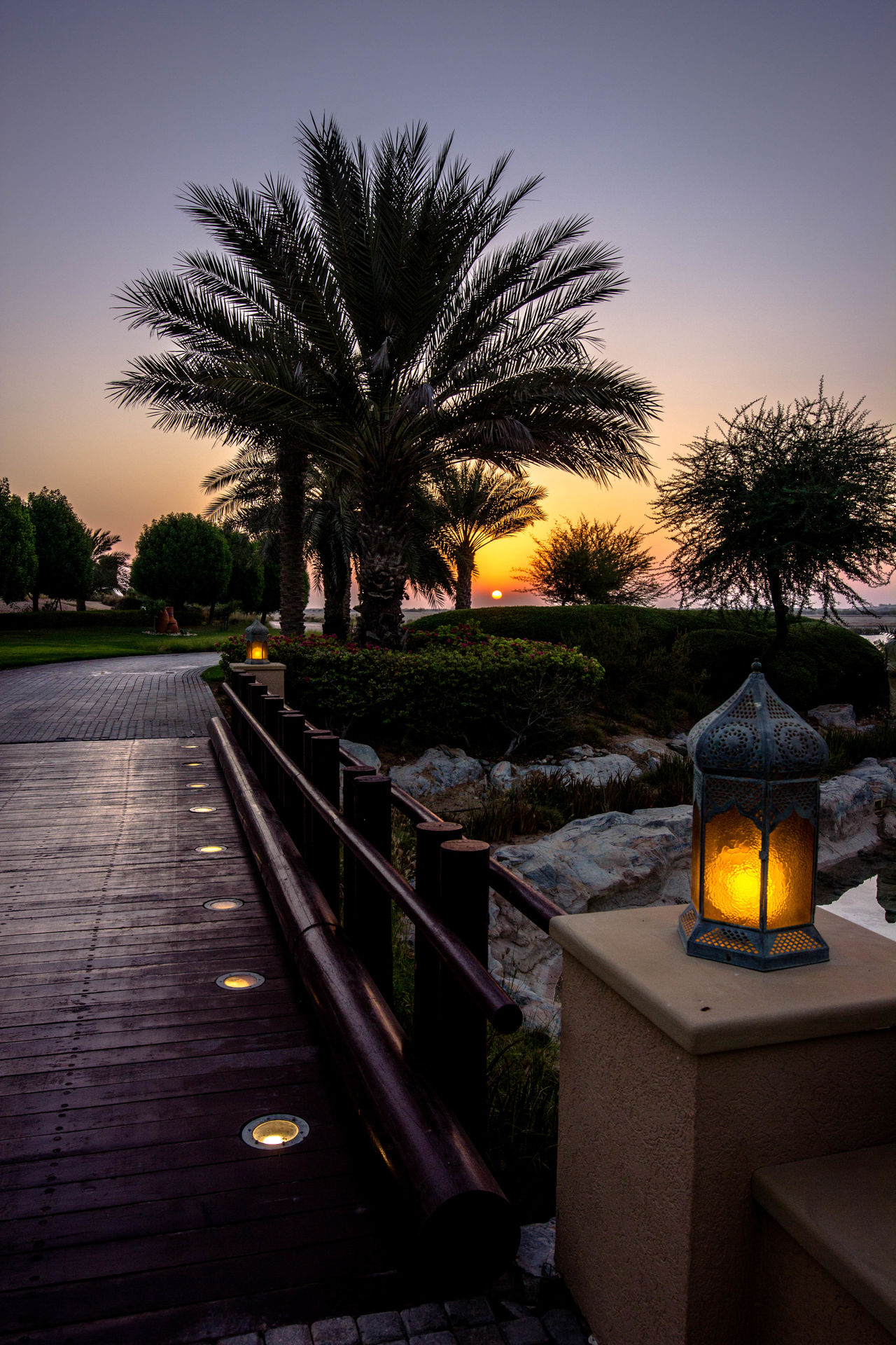 Abu Dhabi Anataria Hotel Beauty In Nature Nature No People Outdoors Sunset Tree