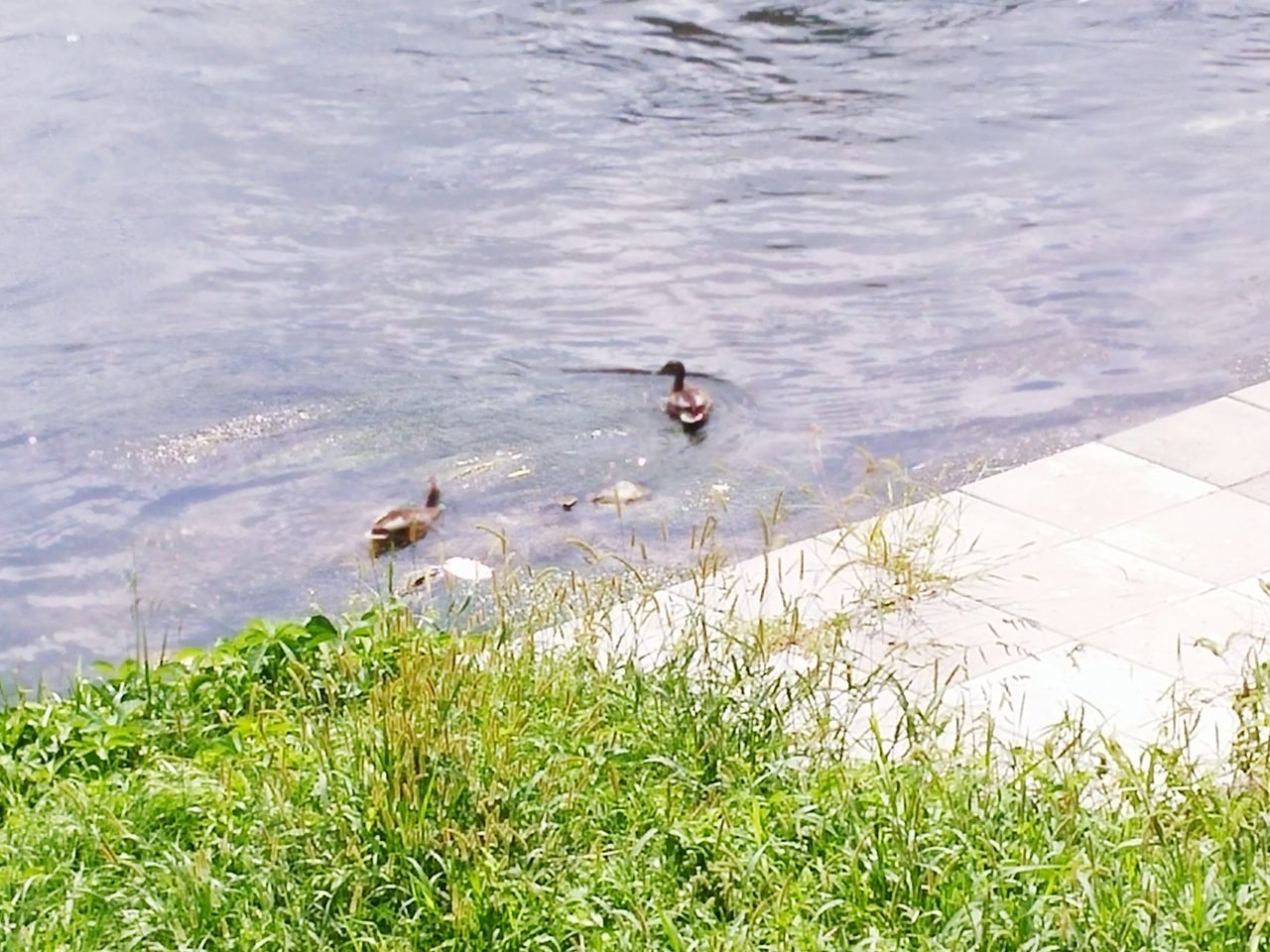 Ducks :) First Eyeem Photo