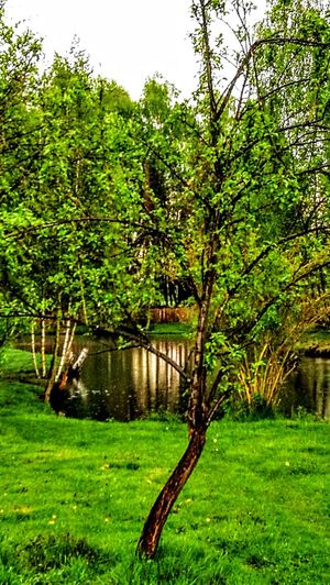 We have here a really wonderful nature...the north/east of Germany...Wendland.... Tree Green Color Grass Growth Outdoors Nature No People Tranquility Beauty In Nature Day Sky Original Picture GetbetterwithAlex Green Color Wendland Springtime Beauty In Nature