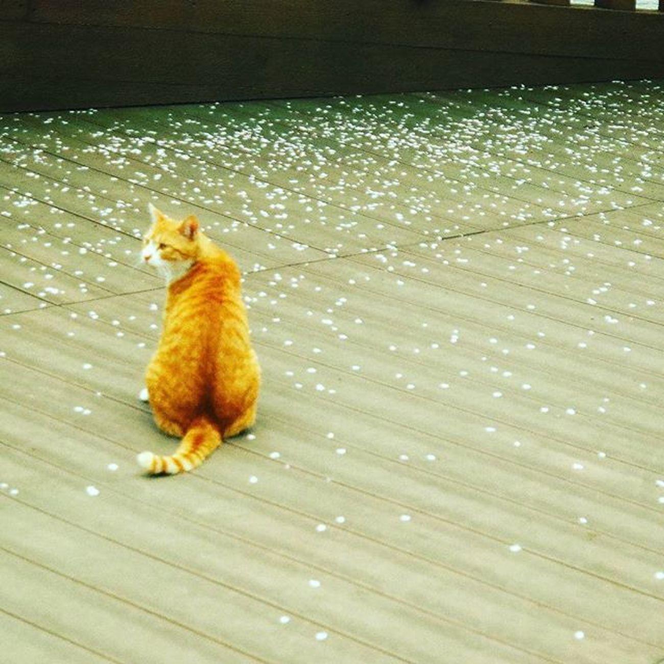 고양이 엉덩이 . . .Photography Photographer 부산 Busan Spring Flower 일상 데일리 감성 감성사진 사진 여행 일상공유 Sotong 미러리스카메라 Follow Followme Photo Travel Daily Southkorea