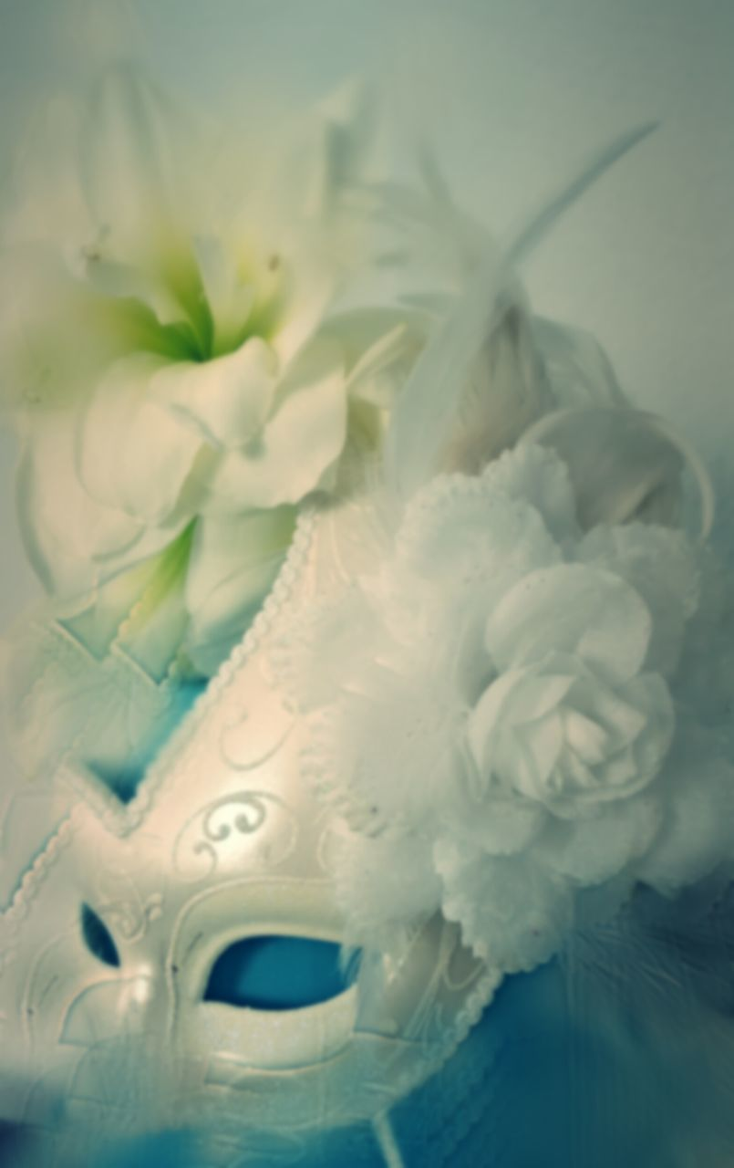 white color, close-up, no people, indoors, flower, day, nature, flower head
