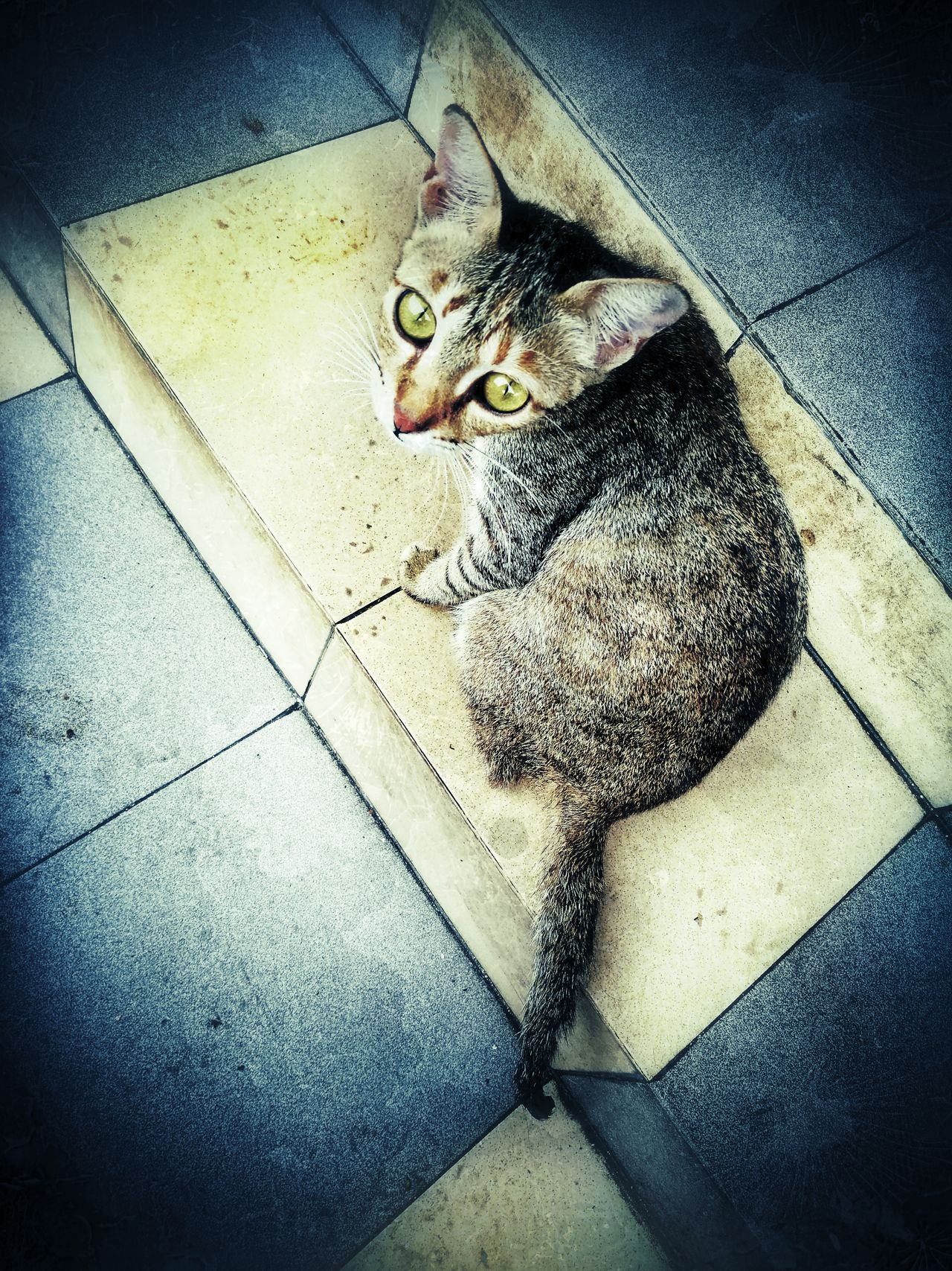 Domestic Animals Animal Themes Pets Domestic Cat Mammal HuaweiP9 Huawei P9 Plus Huaweiphotography Homeless Animal Homeless Cat Animal Cat Hua Wei P9 Plus Homeless Cats Homeless Kitten Homeless Homelessness  Outdoors Outdoor Photography Kitten One Animal Homelessness