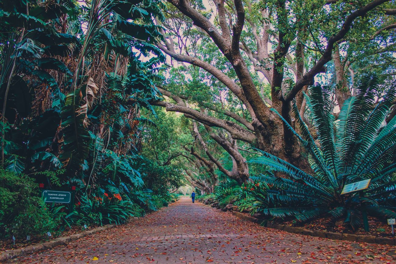 Nature Nature_collection Nature Photography Forest South Africa Botanical Gardens Kirstenbosch