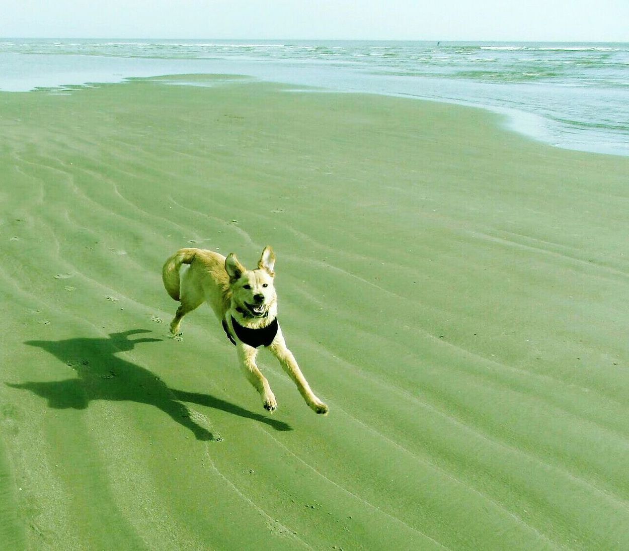 Happy Dog Sea One Animal Water Beach Mammal Nature Domestic Animals Animal Themes Outdoors No People Pets Day Love To Run Isle Of Palms Paw Print Freedom Smiling Puppy Sand In My Paws Golden Retriever Running Labrador Retriever Beach Hair Dont Care Live For The Story