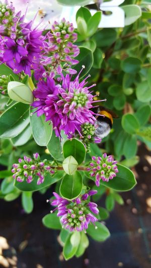 Flower Freshness Fragility Growth Beauty In Nature Petal Nature Close-up Flower Head Focus On Foreground Plant Springtime Purple Blossom In Bloom Pink Color Botany Bunch Of Flowers Outdoors Blooming
