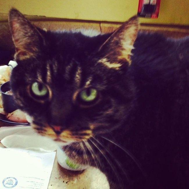 Miss muffin Lynn ??? Catsofinstagram Cats Fiercefelines Tabbycats lazycatdaze felinefamily