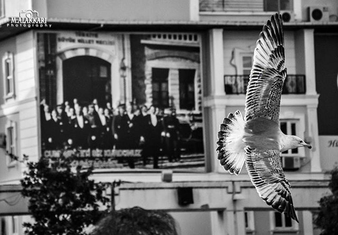 صورة_اليوم صور تصويري  عرب عدستي المصورون المصورون_العرب اسطنبول *-*-*-*-*-*-*-*-*-*-*-*-*-*- like a moon with billion stars .. Moon Sky Stars Startrails Hello World First Eyeem Photo Syriacrisis Animal Photo Photo Of The Day Night Night Photography Landscape Love Ward Nikon Istanbul