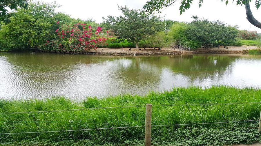 Parque da lagoa. First Eyeem Photo