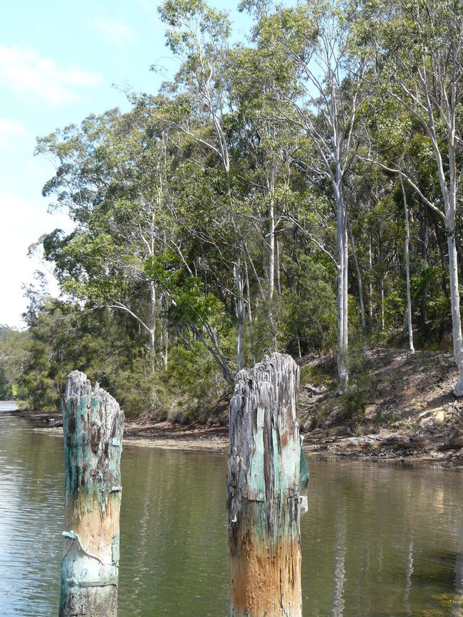 Beauty In Nature Gum Trees Narooma  Nature Pylons River Riverbank Riverscape Riverside Tranquility Wagonga Inlet Water Waterfront