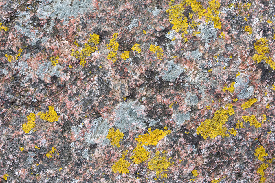 Close-up of red rock and yellow lichen Abstract Backgrounds Beauty In Nature Close-up Day Full Frame Fungus Geology Lichen Natural Pattern Nature No People Organic Outdoors Pattern Petrology Red Rock - Object Rough Stone - Object Stone Material Symbiotic Relationship Textured  Yellow