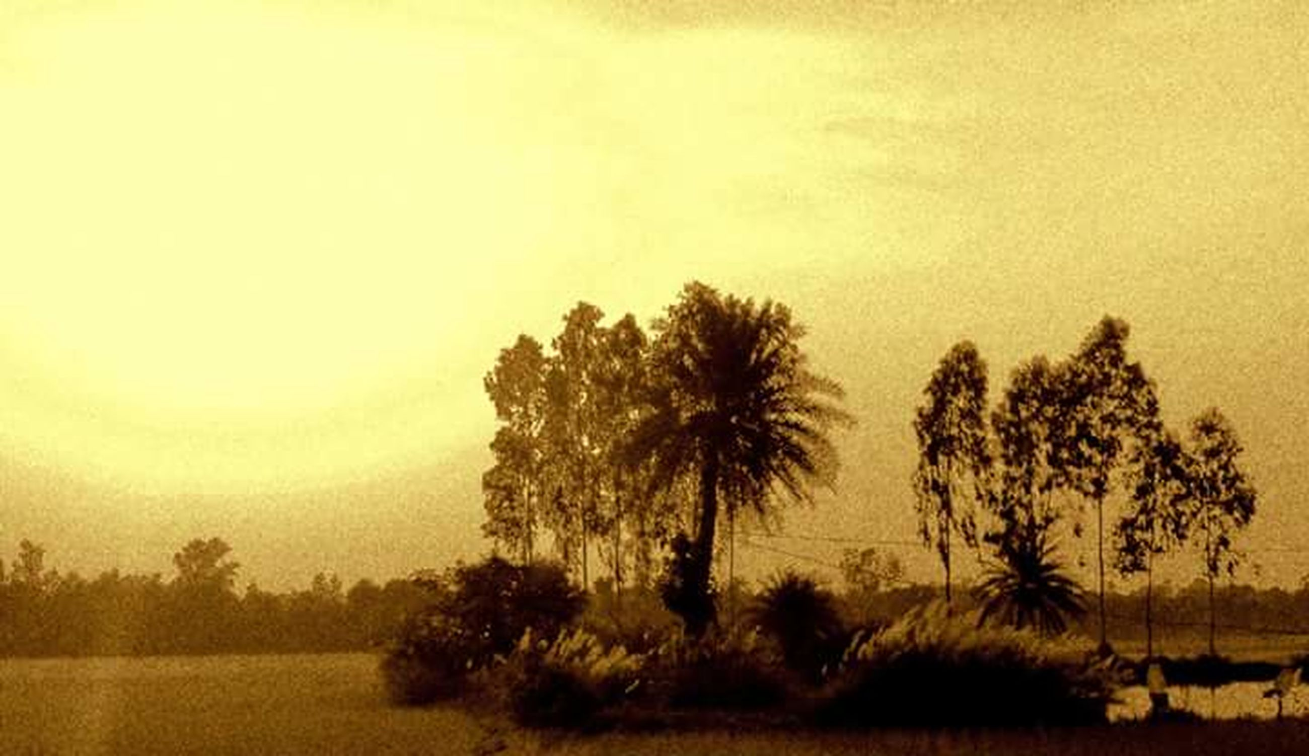 sunset, silhouette, tranquil scene, tranquility, tree, scenics, beauty in nature, sky, nature, palm tree, idyllic, orange color, growth, water, landscape, non-urban scene, dusk, outdoors, field, no people