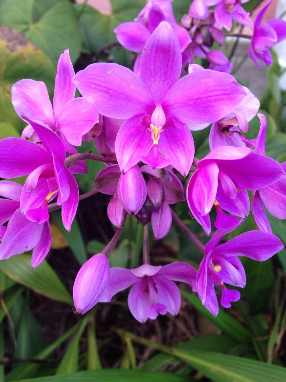 Taking Photos Flower Purple American Samoa