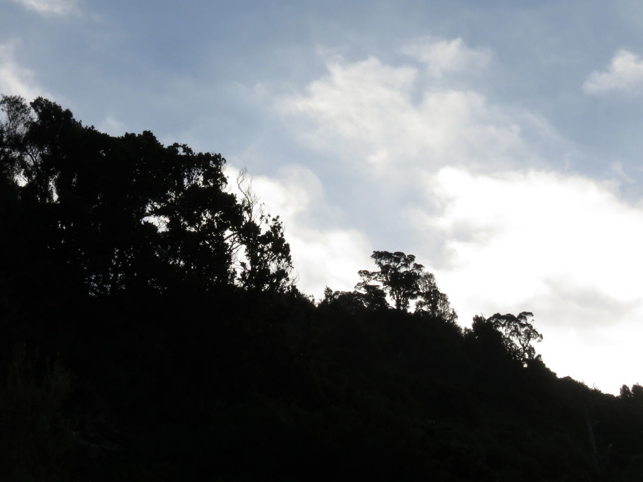 Tree Nature Silhouette Beauty In Nature Forest Landscape No People Outdoors Sky Day Scenics Environment Freshness Aotearoa Exploration Scenic View Rural Scene Relaxing Mountain Range Nature Reserve Native Bush Manawatugorge New Zealand Growth Cloud - Sky
