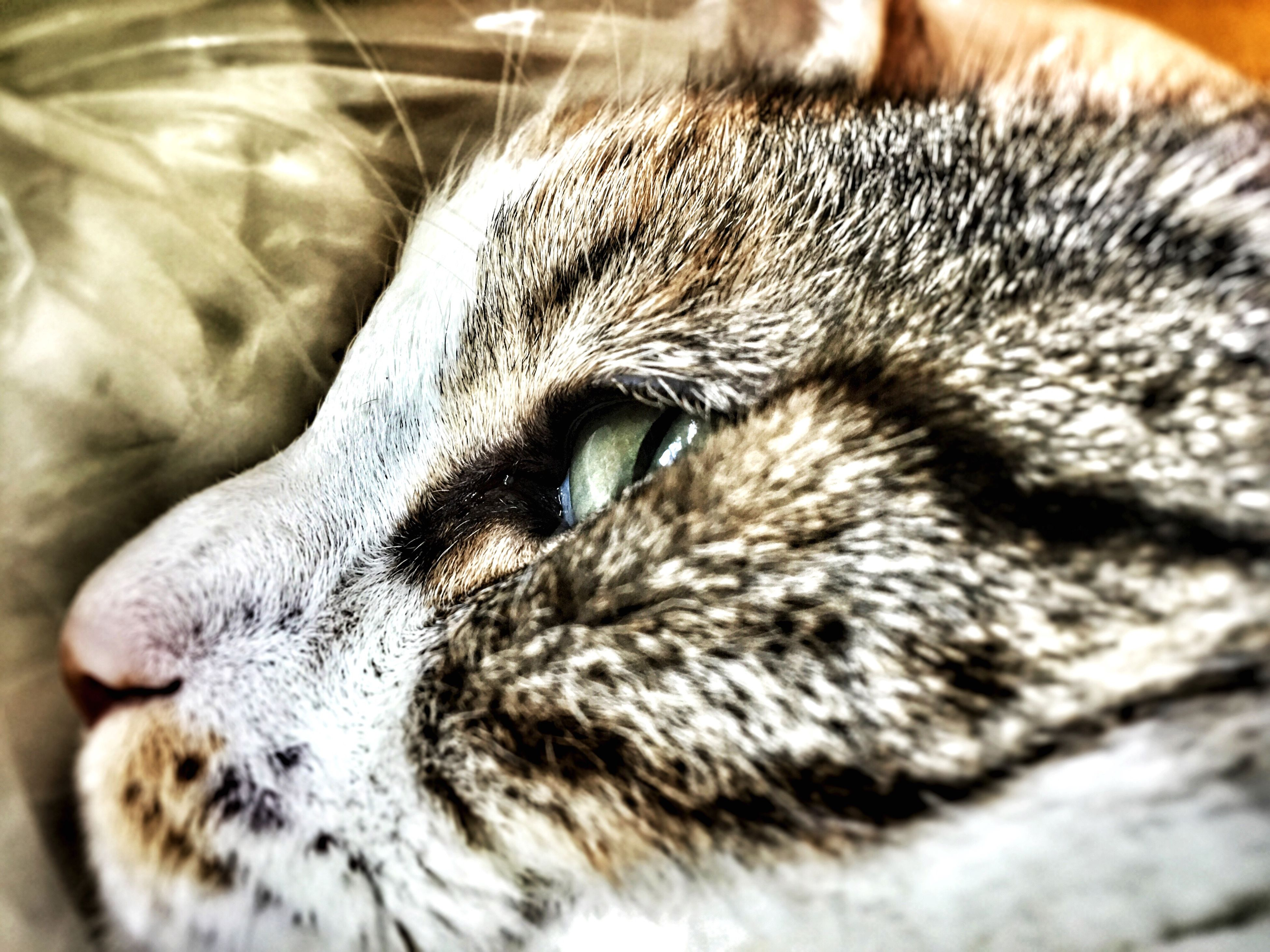 one animal, animal themes, pets, close-up, animal head, domestic animals, animal body part, mammal, indoors, domestic cat, whisker, cat, focus on foreground, animal eye, feline, part of, portrait, looking away, selective focus