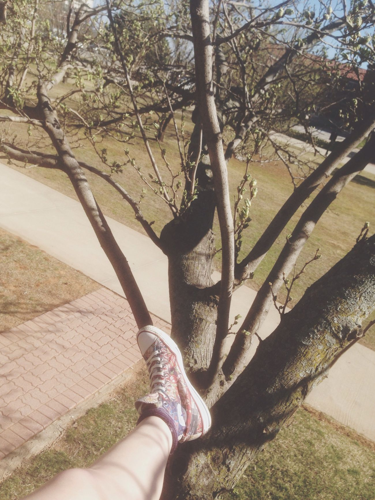 climbed a tree yay Livefromabranch Nature Trees Branch Taking Photos
