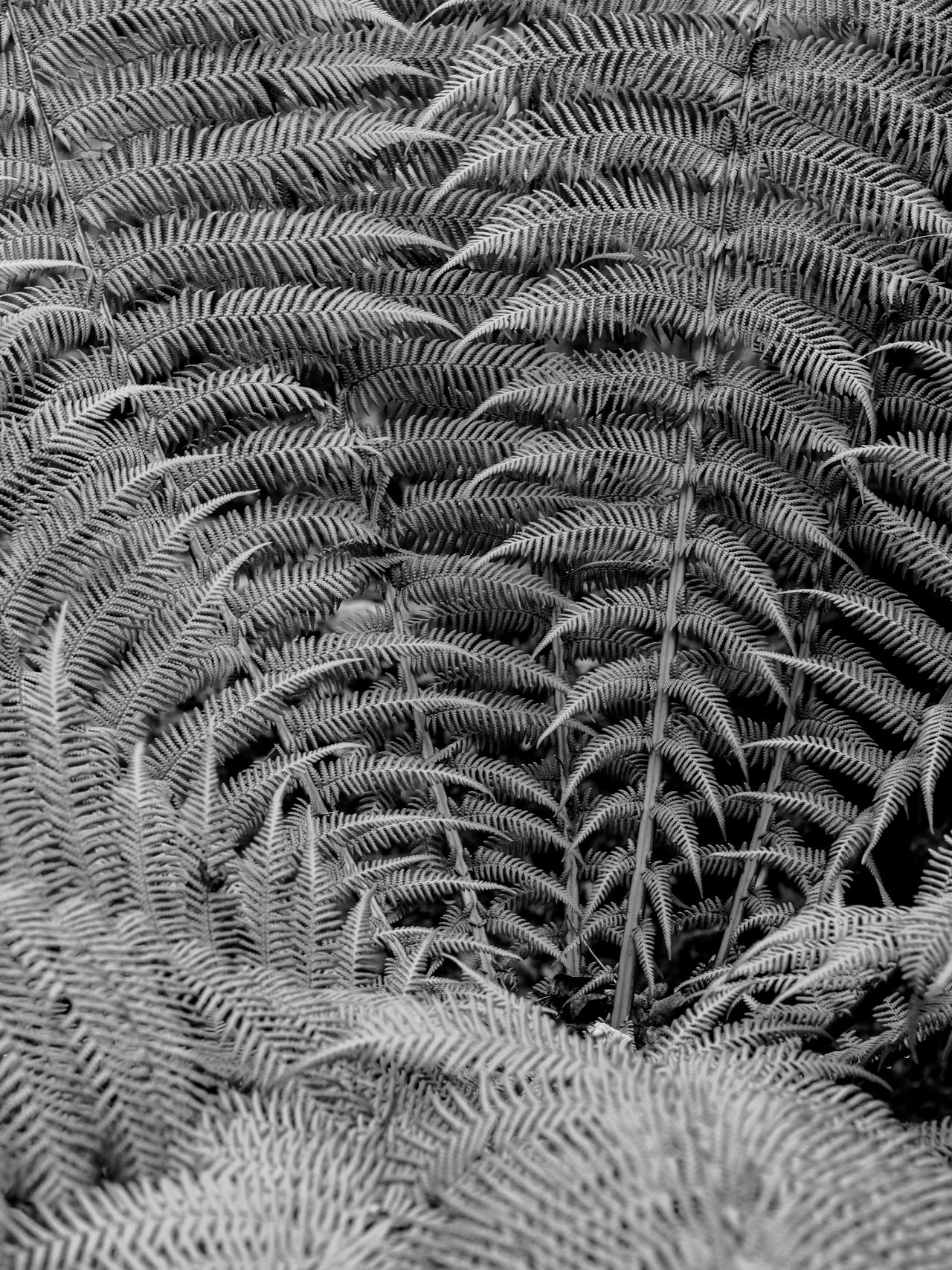 New Zealand tree fern abstract backgrounds close-up fern Nature pattern Textured Tree