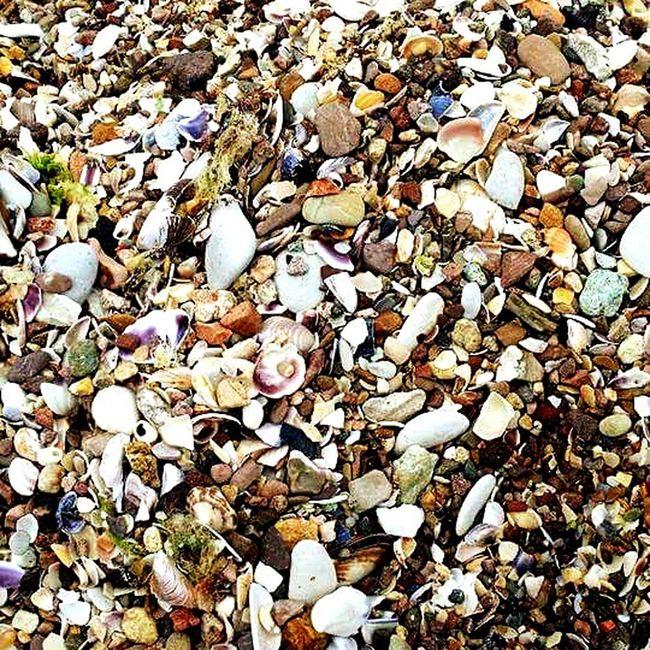 Şile Beach Moss Stone Scollop