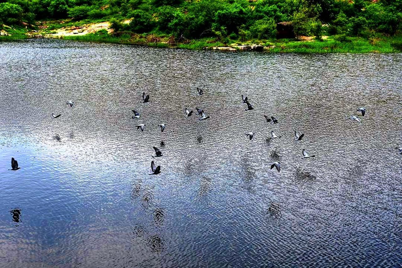 An amazing fly over a lake near mehrangarh fort Nature No People Outdoors Water Beauty In Nature Jodhpur Jodhpur_shotout Mehrangarh Jaswanthada