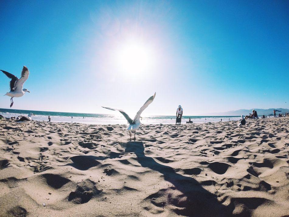 Beautiful stock photos of los angeles, Animal Themes, Animal Wildlife, Animals In The Wild, Beach