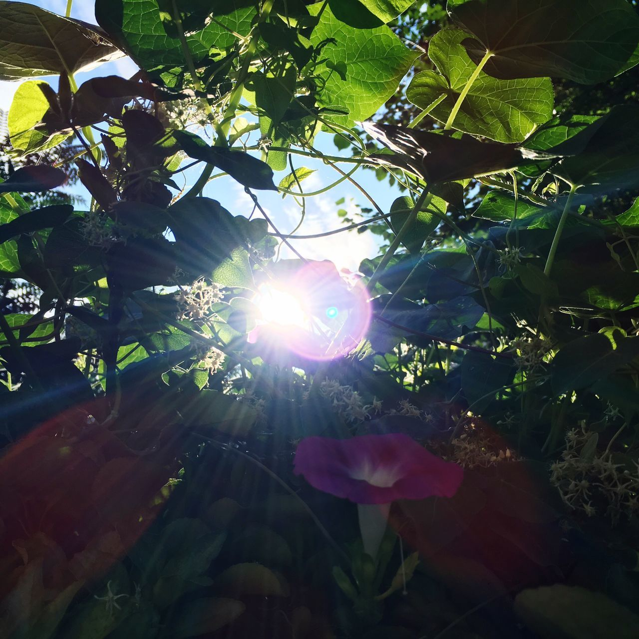 growth, tree, sunlight, lens flare, nature, beauty in nature, leaf, sun, no people, branch, low angle view, flower, plant, outdoors, day, freshness, fragility, close-up, sky