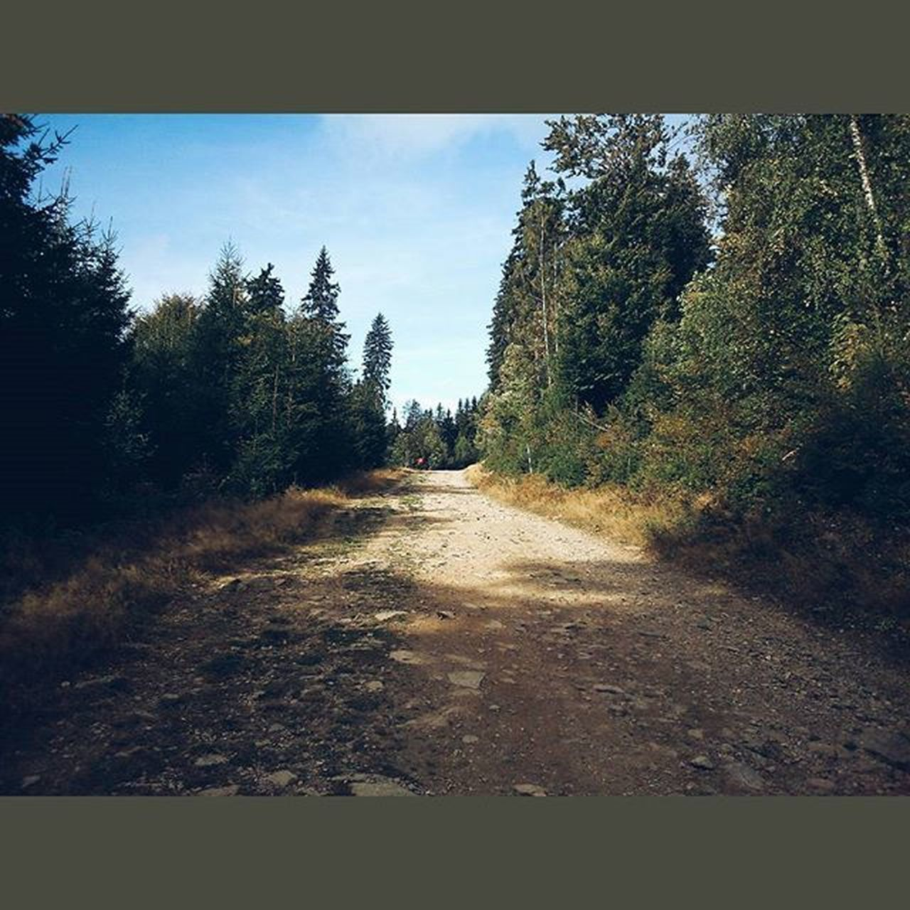 Tohle mi tech 12 let chybelo 😊🌲🚶Krkonose Medvedin Mountains Nature outdoor hike hitchhiking outdoors relax czech czechrepublic vscocze vsco vscocam